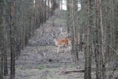 Wildbeobachtung im eigenen Forst